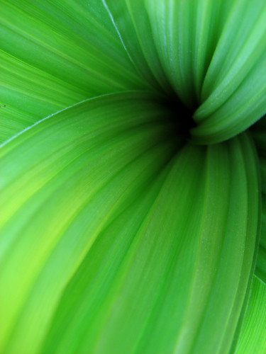 close up photograph green leaf