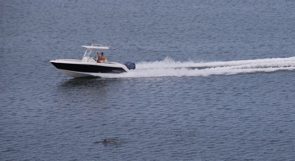 dolphinsboat0236
