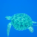 Diving with the Sea Turtle Video