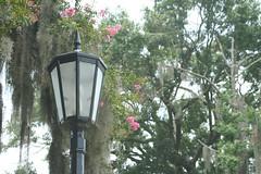 IMG_1837.JPG (sharris2847) Tags: florafauna photoshopelements savannahga2008 colonialcemeterysavannahga