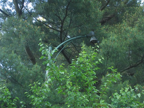 Overgrown lamp post