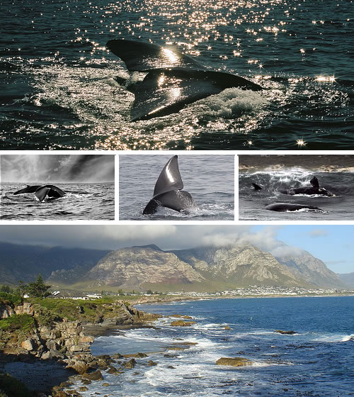 Hermanus, South Africa - whales