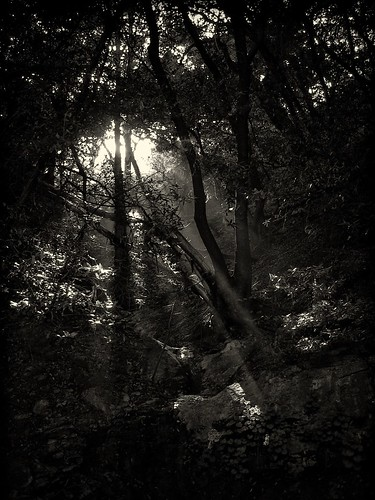 Dust Light Through the Trees (by QruxPix)