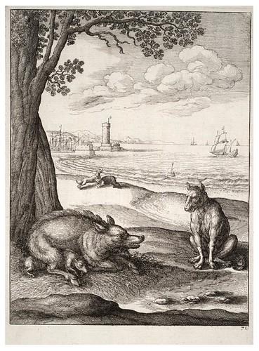 16- El lobo y la cerda