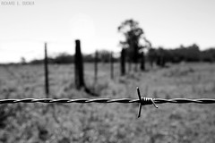 (Richard E. Ducker) Tags: fence wired cerca barbed arame farpado
