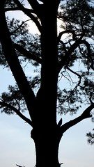 Kalmthoutse Heide (QbiT) Tags: lumix kalmthout lx2