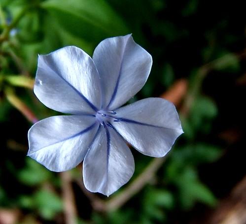 Uma flor para desejar, bom final de domingo ;-)   SVO