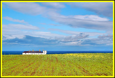 landscape in bloom (adudi) Tags: ocean flowers blue ireland sea panorama white building green home water yellow clouds landscape view shot farm cottage land shot2 northernireland giantscauseway adudi