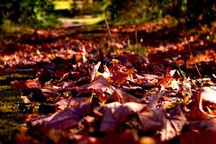 Leaf trail (judo_dad1953) Tags: autumn fall nature leaf october pentax trail
