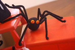Orange Eyed Spider