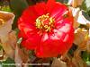 Pretty Flower Shot (phil_sidenstricker) Tags: flower floral donotcopy valleyofthesunphoenixmetro upcoming:event=981998 southmountainfarmphoenixazusa