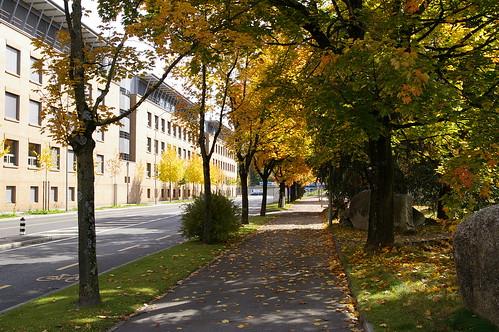 學校前的道路 還有些是綠的
