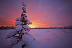 Morning Solitude (Wolfhorn) Tags: morning winter cold nature alaska sunrise landscape wilderness abigfave platinumphoto colorphotoaward ultimateshot damniwishidtakenthat