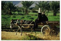 Le donne dagli alti cappelli a punta (Labjus) Tags: travel verde women south punta donne yemen farmer viaggio velo sud campi yemeni alti cappelli contadine repotage labjus womenwithhighpointedhats