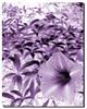 Nothing To Say (DeLaRam.) Tags: macro d mother violet horn nothingtosay