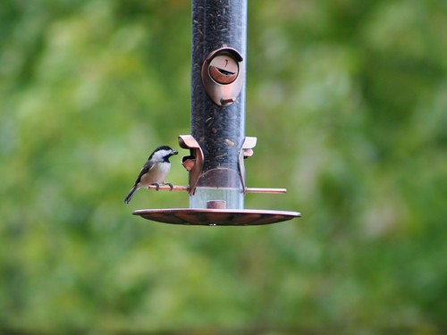 birdfeeder-caring for those with dementia in summer