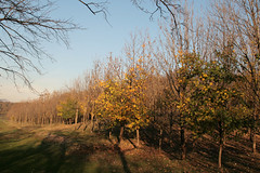 ombre lunghe nel bosco