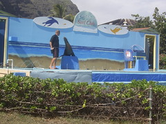 PIC_0127 (scubawatters) Tags: hawaii oahu blowhole sealifepark