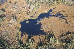 Boreal near Ft McMurray Airport - 02 (pembina.institute) Tags: forest fort mcmurray boreal
