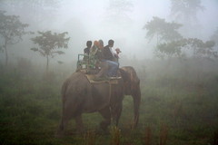 Good Morning - Kaziranga (Monsoon Lover ( On - Off )) Tags: morning india mist elephant forest flickr safari assam kaziranga elephantsafari kaziranganationalpark mywinners sudipmonsoonlover sudipguharay nationalparksofindia onehornedindianrhino