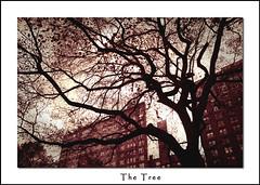 The Tree (DP|Photography) Tags: blackandwhite tree nature silhouette shadows imagination blackwhitephotos debashispradhan dpphotography dp|photography