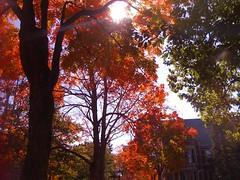 2008-11-25-MichelleArgueta (BowdoinCollege) Tags: bowdoin