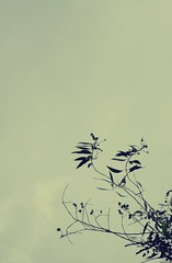 (Syka Lê Vy) Tags: trees sky black girl vietnam vy dreamer 2009 sleepwalker lê syka vắng fromsykawithlove everythingicanseenow sykalevy lehoangvy sundayspirit