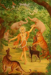 Chaitanya  lila Jarikhanda Forest - ISKCON desire tree 06 (ISKCON Desire Tree) Tags: lila krishna krsna yatra prabhupada sankirtan radha disappearance aarti balaram jagannath chaitanya iskcon goswami srilaprabhupada damodar siddhanta rupagoswami haridasthakur jaghaimadhai bhaktivinodthakur gaurkishoredasbabaji