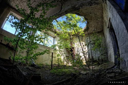 Interior forest [explored]