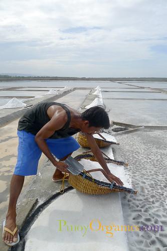 Mina de Oro-harvest salt