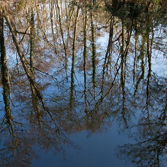 hcriB (me'nthedogs) Tags: trees reflection pond somerset birch levels