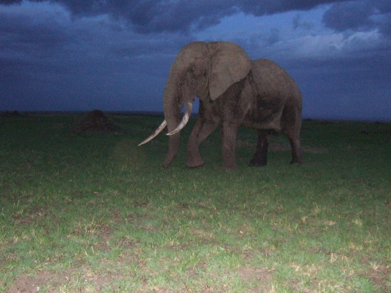 Elephant at Mara Triangle, Kenya