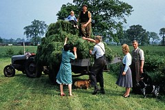 1955 - Collecting Silage on Mosely's farm, Cheshire (doublejeopardy) Tags: 1955 cheshire farm silage kodakchromeslide