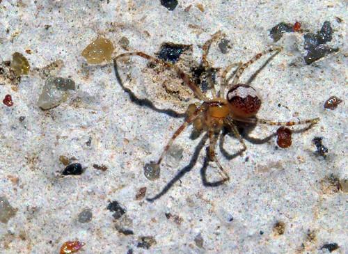Spider Macro 1