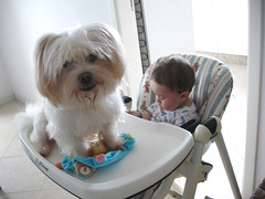 Meus filhotes (Zyg [ Bisous Bisous ]) Tags: dog baby família filhos filhote lipe tite