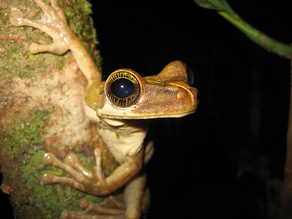 Amazon Rainforest Frog Species