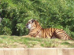 117 (stripedtiger71) Tags: nationalzoo dczoo zoonationalzoo