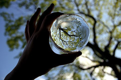 Crystal Ball (victoria.anne) Tags: blue shadow summer sky tree green glass see leaf pretty dof hand patio jaime corydon iloveit glode aplusphoto thisoneisdedicatedtomyfrienddaniwholovestrees