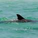 Anna Dolphin Photo 2