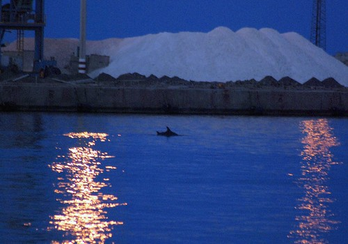 Delfines 004