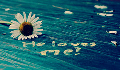 Love Test ({peace&love}) Tags: blue flower green chalk words petals daisy written peacelove helovesme lovetest pinkparis1233