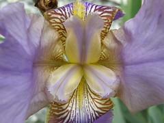 P6210449 (hairstyleca) Tags: olympus floraandfauna sp550