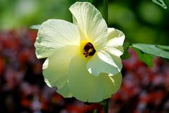 BP Flower