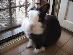 Fletcher (AleFletcher) Tags: fletcher lapin