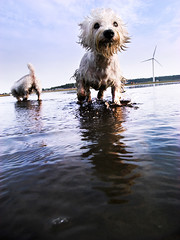 Water Dogs (mookio ) Tags: travel blue sea sky cloud dog water landscapes 28mm taiwan fav   gaomei grd  platinumphoto grd2 theunforgettablepictures goldstaraward thebestofday gnneniyisi mookio