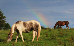 Somewhere Under The Rainbow (Chris*Bolton) Tags: ireland sky horses horse field grass rainbow scenery grazing equine graze sobeautiful supershot rathdrum golddragon abigfave platinumphoto anawesomeshot ultimateshot infinestyle ysplix theunforgettablepictures newacademy brillianteyejewel ballinderry picturefantastic theperfectphotographer goldstaraward rubyphotographer inspiredbyhim wickoow
