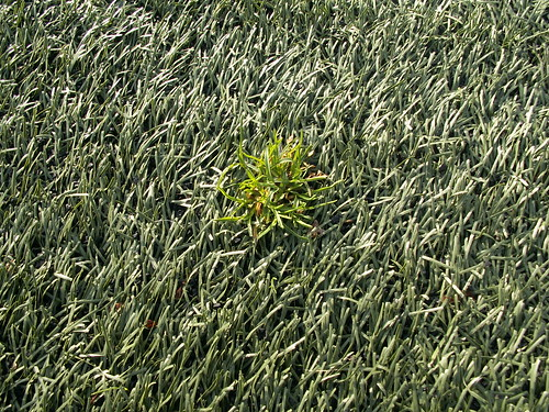 How To care For Astroturf