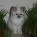 Remco's kitten 7