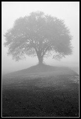Solitude ( dragonflyriri  (Limited Flickr Time)) Tags: morning tree fog interestingness solitude lovepeace magicmoments blackdiamond naturesfinest freephotos top20tree blackwhiteaward qualitypixels damniwishidtakenthat 100commentgroup