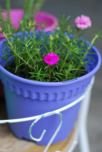 Flower in a blue plastic pot